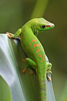 Gecko on tree branch
